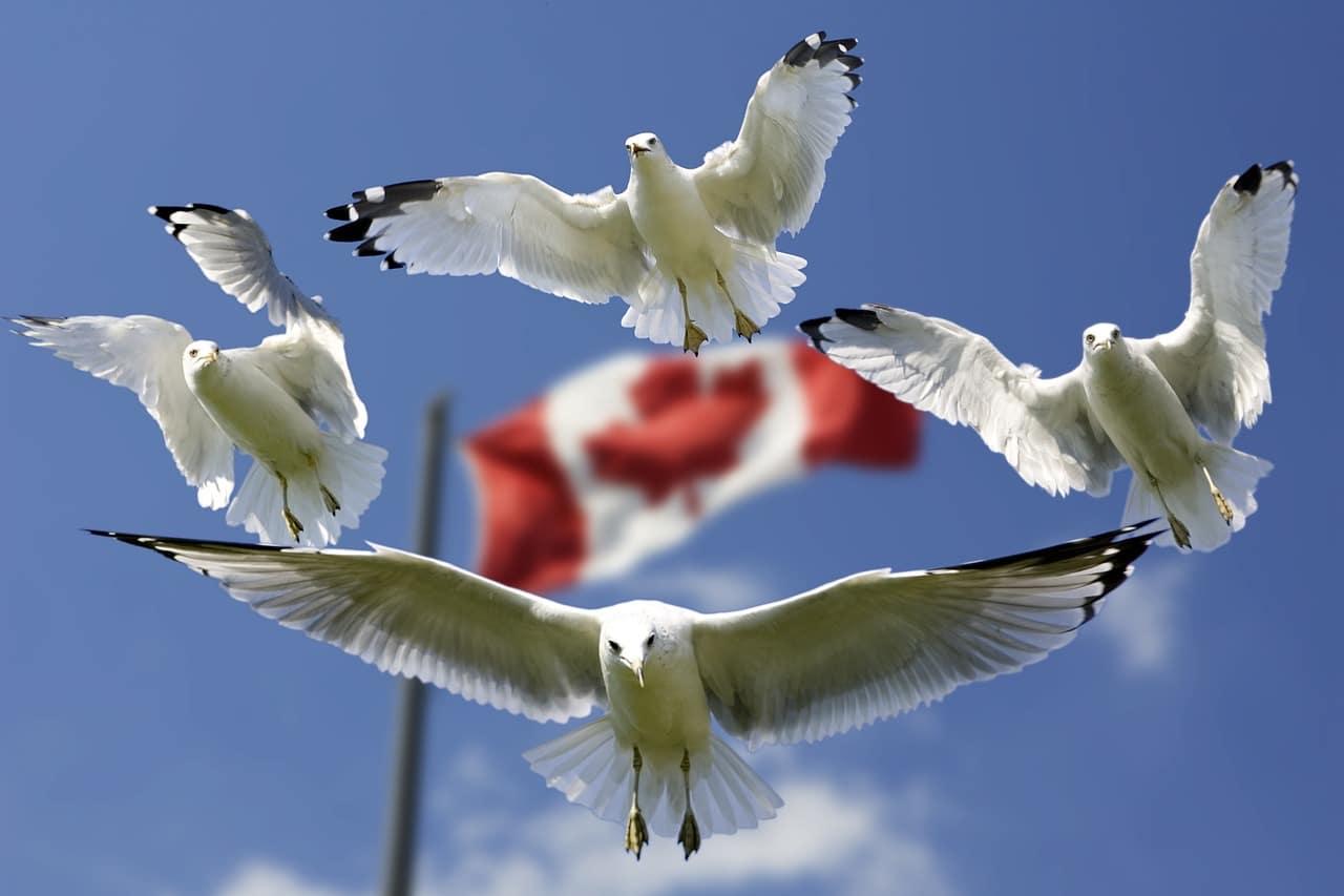 أفضل مدن كندا | 5 مدن كندية للعائلات و طرق الهجرة العائلية