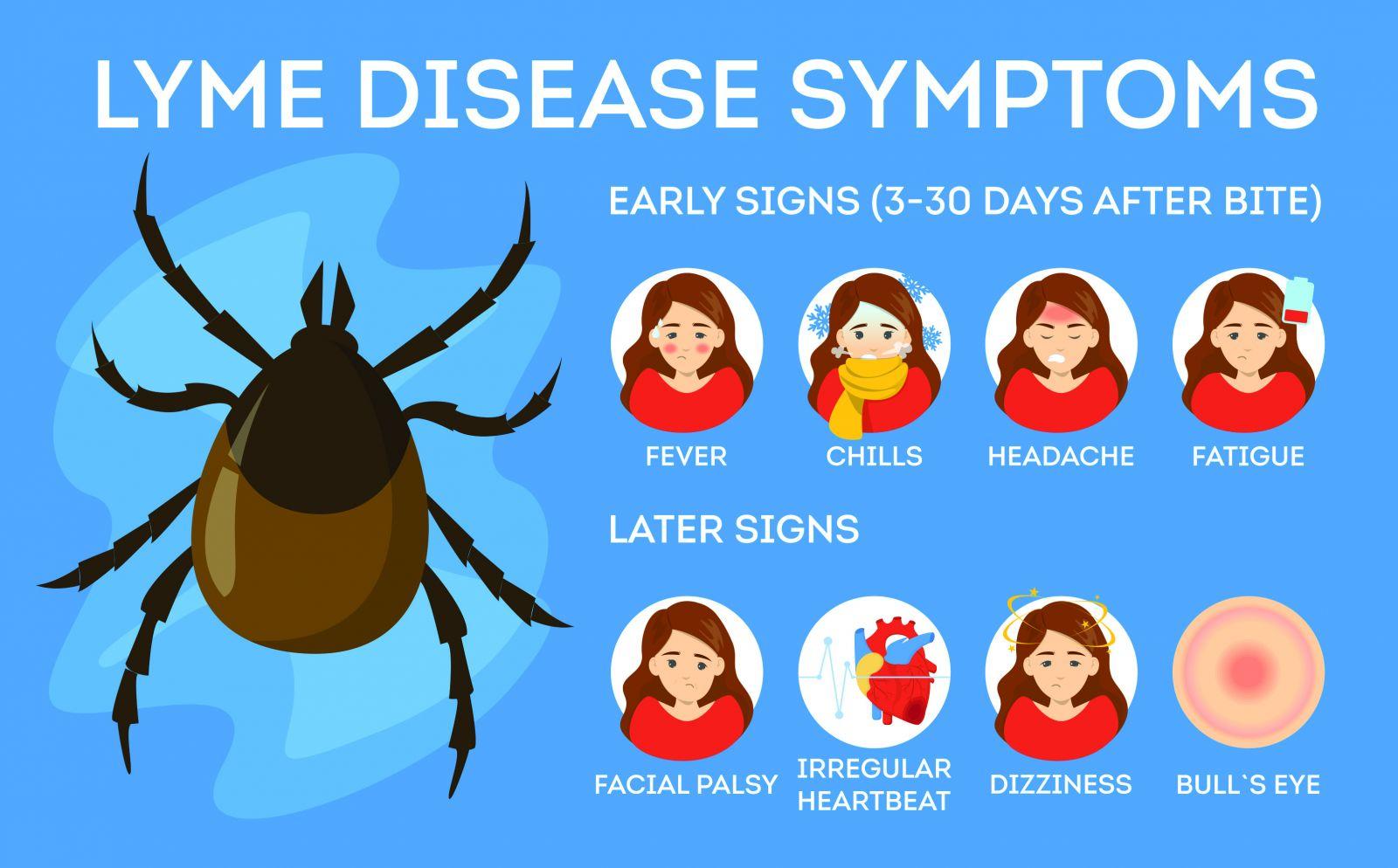 مرض لايم المنتشر في مقاطعة كيبيك تاريخه و أعراضه و طرق الوقاية منه