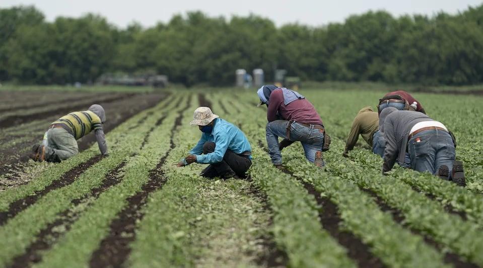 إنتشار فيروس كورونا في أونتاريو بين العمال الغير شرعيين