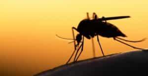 فيروس غرب النيل يصل إلى المدن الكندية عن طريق البعوض