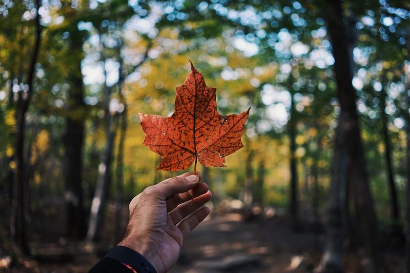 9 أشياء لابد معرفتها عند الوصول إلى كندا