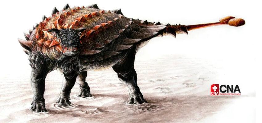 بعد 90 عام من البحث تم تحديد عظام ديناصور كولومبيا البريطانية على أنه ينتمى إلى أنكيلوصورات
