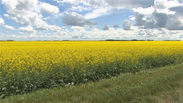 زيادة طلب القمح و الحبوب فى مقاطعة أونتاريو
