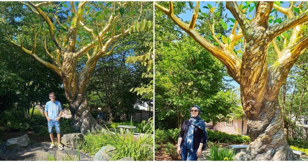 شاهد الشجرة الذهبية الموجودة فى كولومبيا البريطانية
