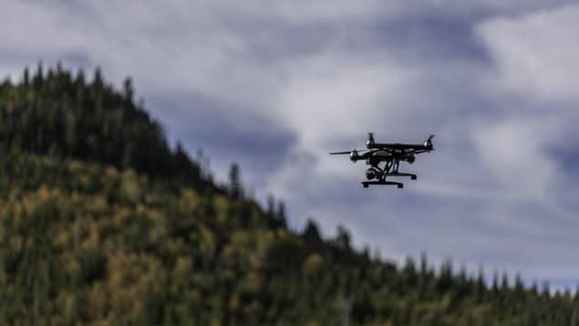 تحسين الطائرات بدون طيار لدراسة الخفافيش والطيور والحشرات