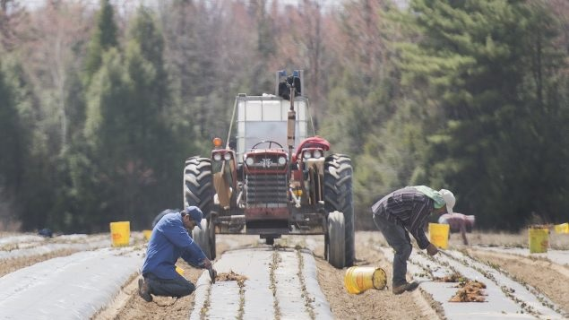 تريد أوتاوا تحسين الظروف المعيشية للعمال الأجانب المؤقتين