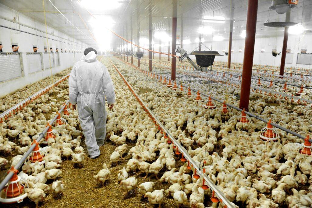 خطورة إستخدام المضادات الحيوية فى الحيوانات على الصحة العامة