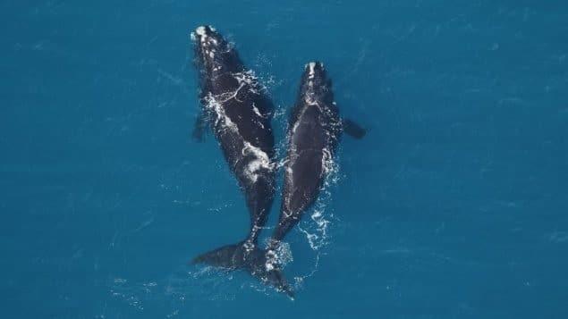 مؤسسة خيرية تحذر من خطر إنقراض الحيتان