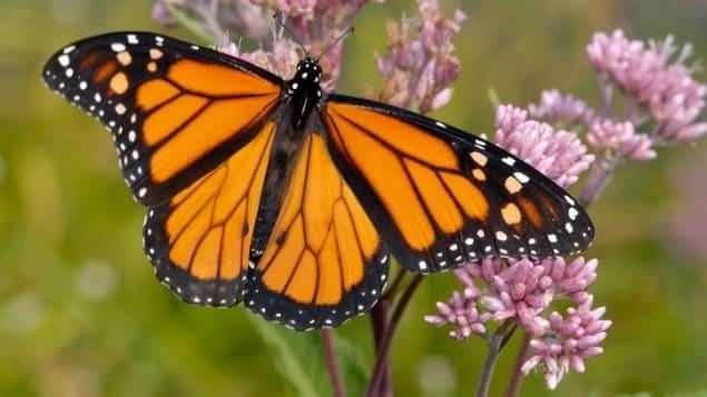 تراجع الحشرات فى العالم قضية خطيرة على الطبيعة والبشر