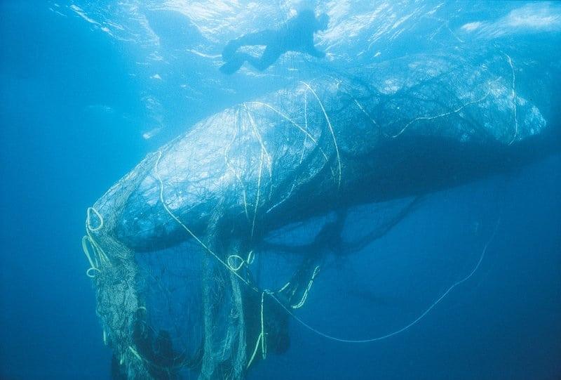 تمول كندا استرداد أطنان من معدات الصيد المفقودة  Ghost Gear Fund