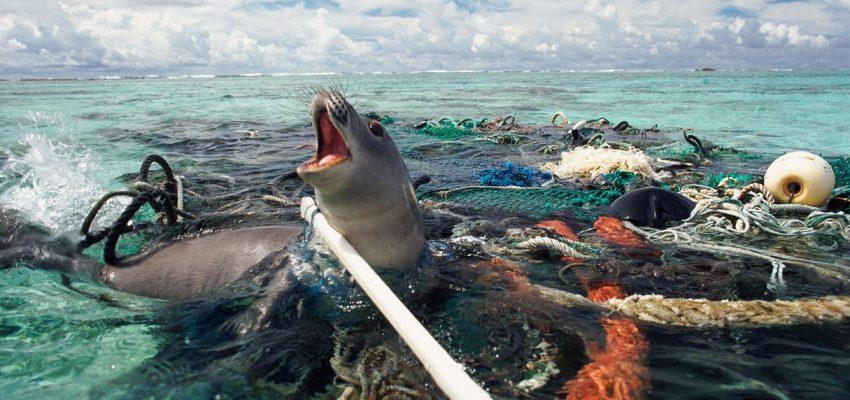 تمول كندا استرداد أطنان من معدات الصيد المفقودة | Ghost Gear Fund
