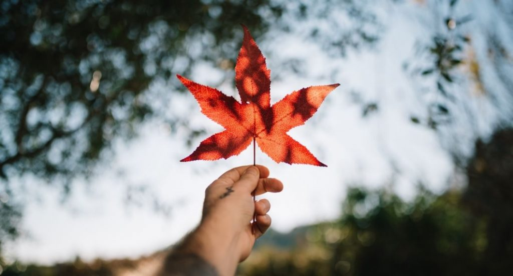 كندا الآن أكثر شهرة من الولايات المتحدة كوجهة للدراسة بالخارج