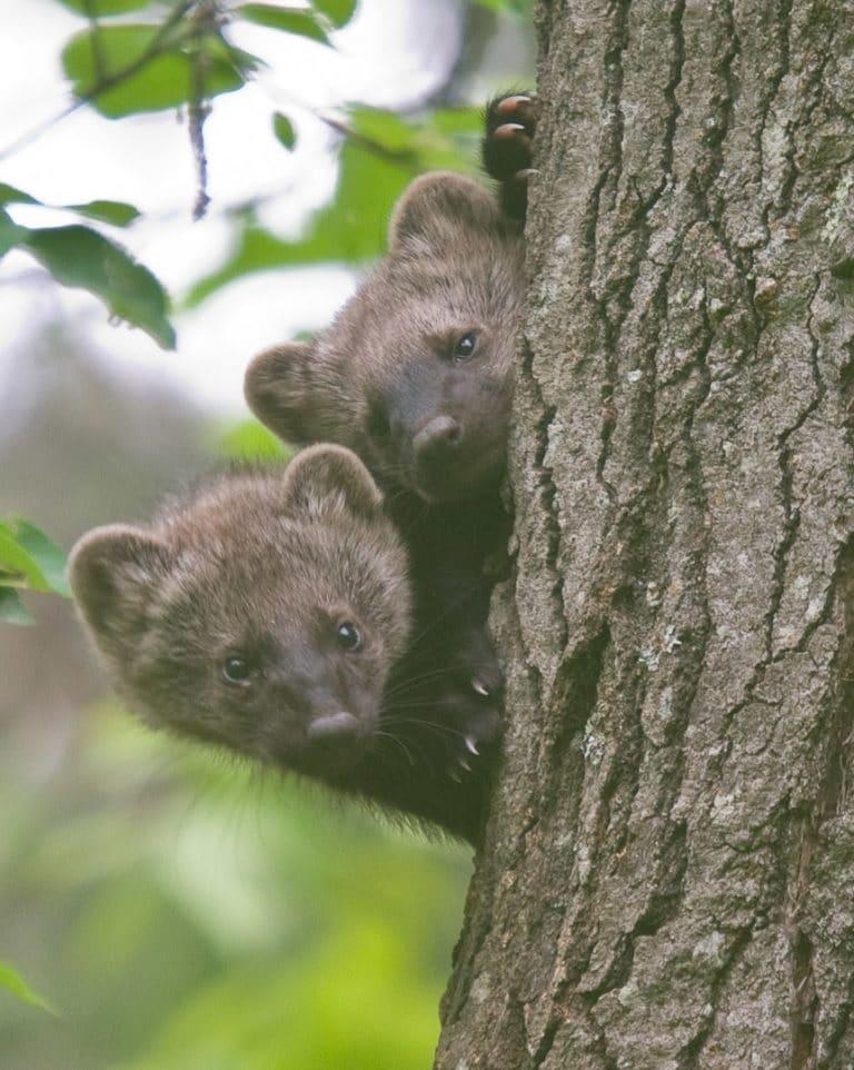 منطقة محمية فى كيبيك لتحسين حركة الأنواع