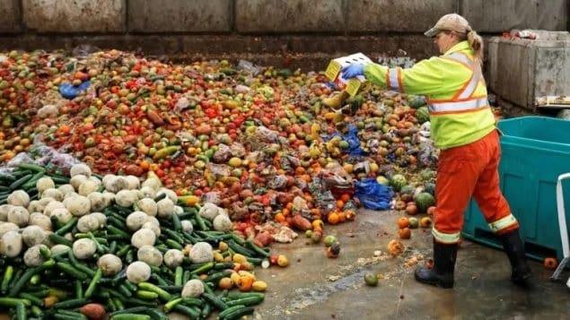 تقرير جديد يرصد كمية الطعام التى تهدر فى كندا