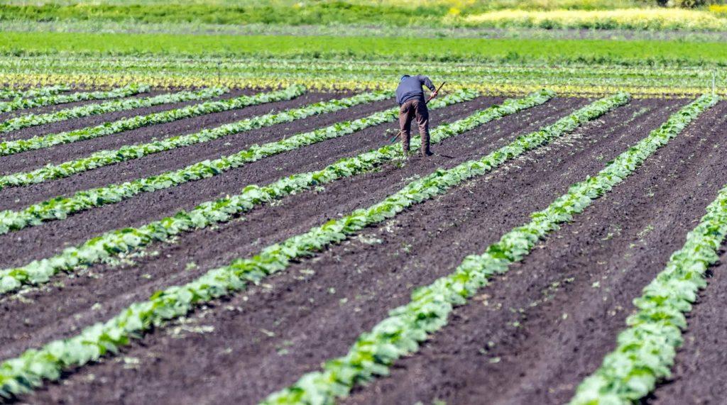 كندا تجري تغييرات كبيرة على أنظمة العمال الأجانب المؤقتين